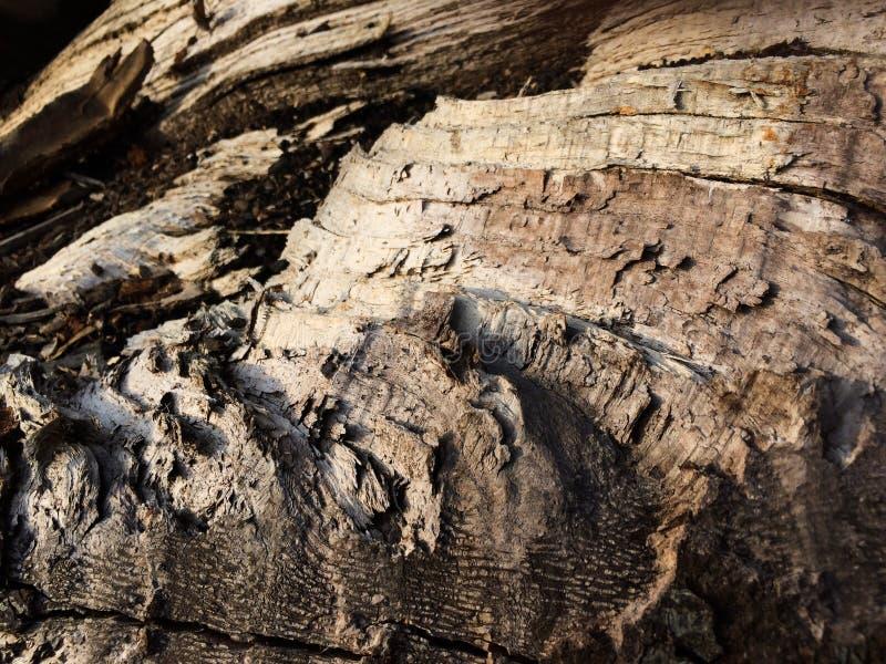 Внутри текстуры коры дерева разделения деревянной стоковое изображение