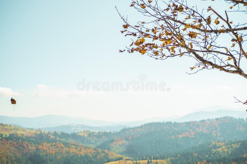 Внушительное изображение дерева бука с лист летания на наклоне холма на долину горы драматическое место выходит померанцовый желт стоковая фотография