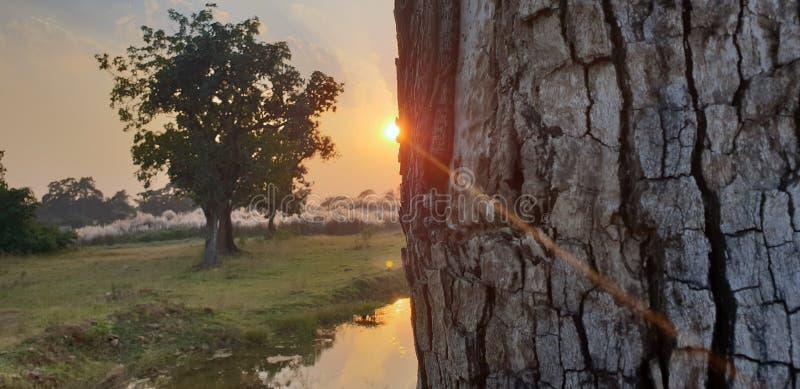 внушительный заход солнца стоковые фотографии rf