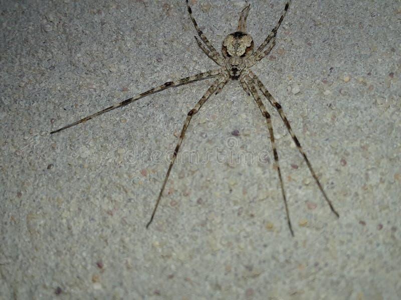 Внушительный серый паук стоковое фото rf