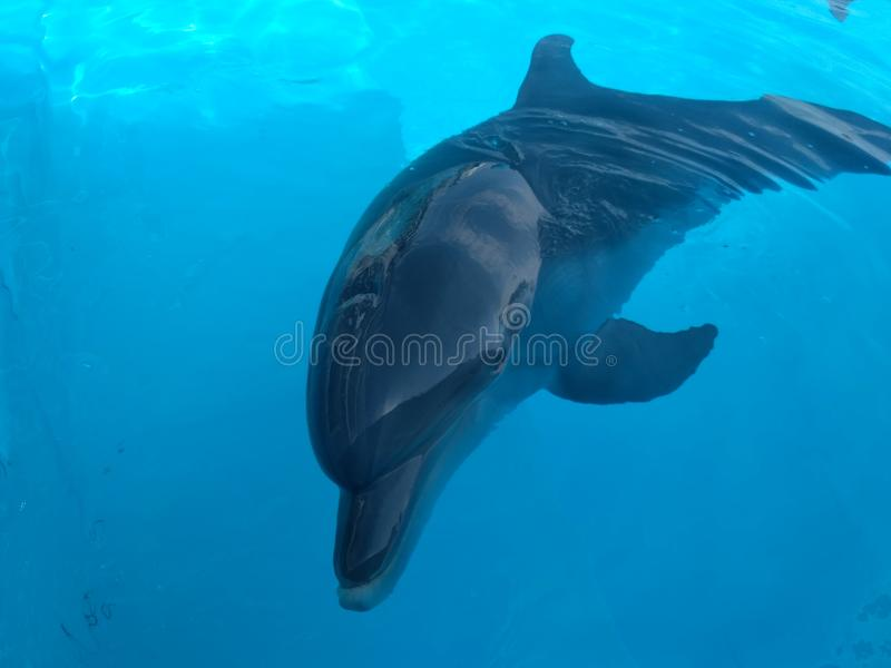 Внушительный дельфин стоковое фото rf