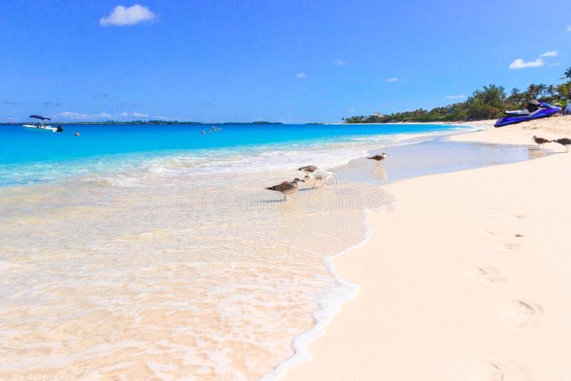 Вода бирюзы карибского моря в Нассау, Багамских островов стоковое фото