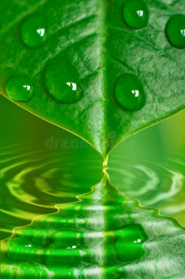 Download вода листьев падений стоковое изображение. изображение насчитывающей стекло - 18376297