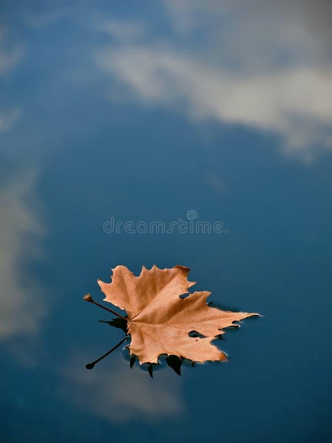 вода лужицы листьев стоковое изображение rf