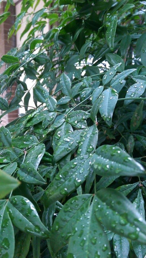 Вода на листьях стоковые изображения