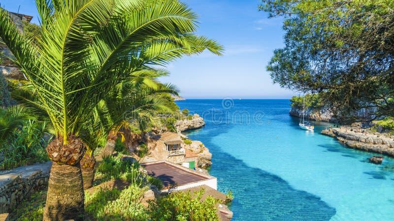 Вода пальмы и бирюзы Cala Llombards, острова Мальорка стоковая фотография rf