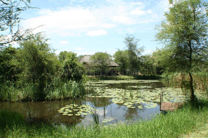 Вода природы в Африке с лилиями стоковое изображение