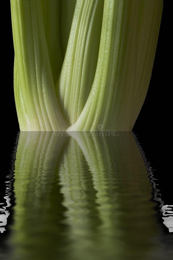 вода сельдерея стоковое изображение rf
