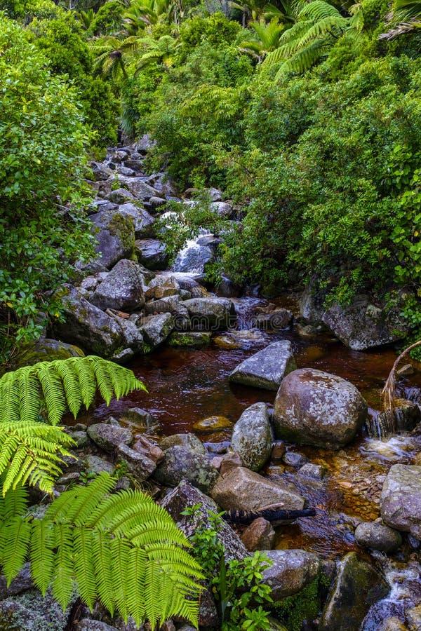 Вода спеша вокруг камней стоковое фото rf