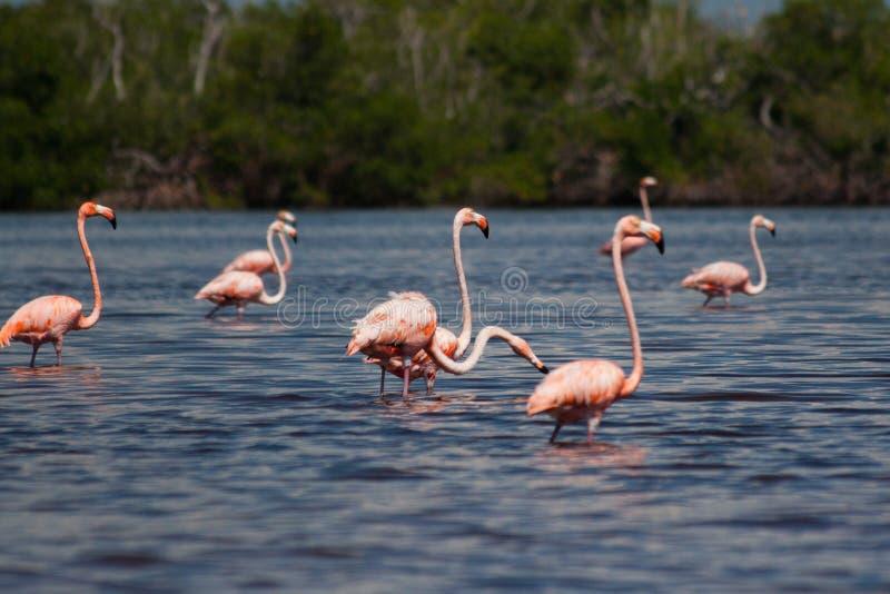 вода фламингоов стоковое фото rf