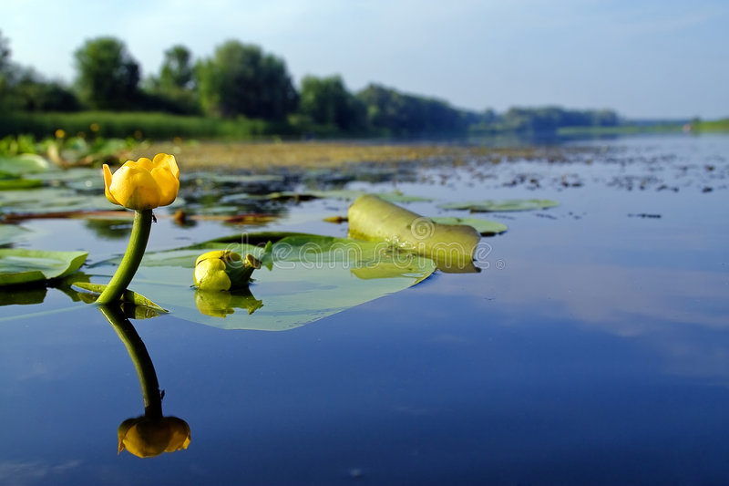 вода цветка стоковая фотография rf