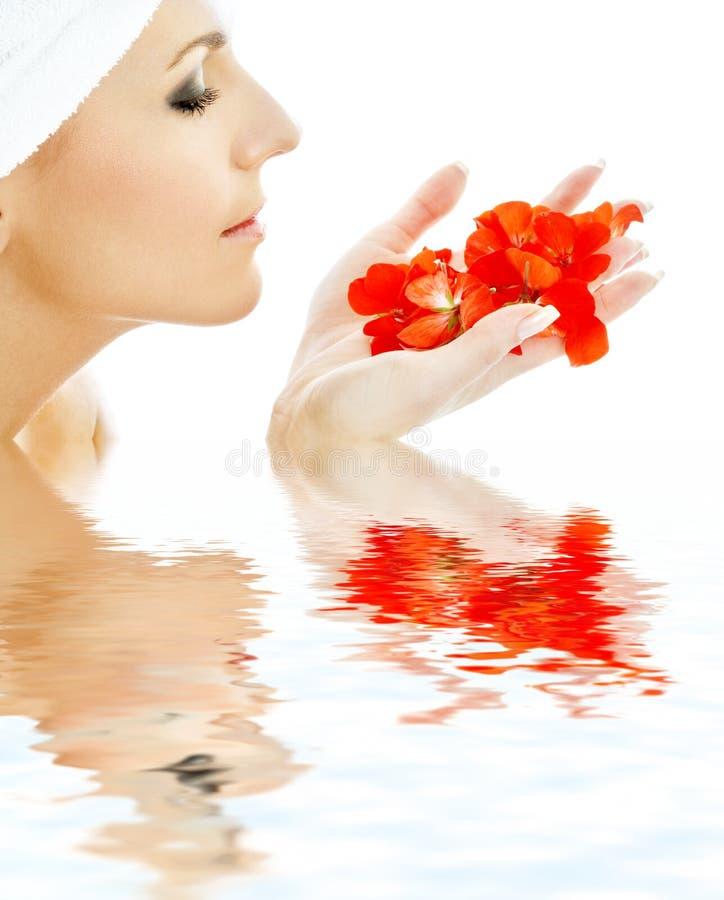 вода 3 лепестков красная стоковые изображения