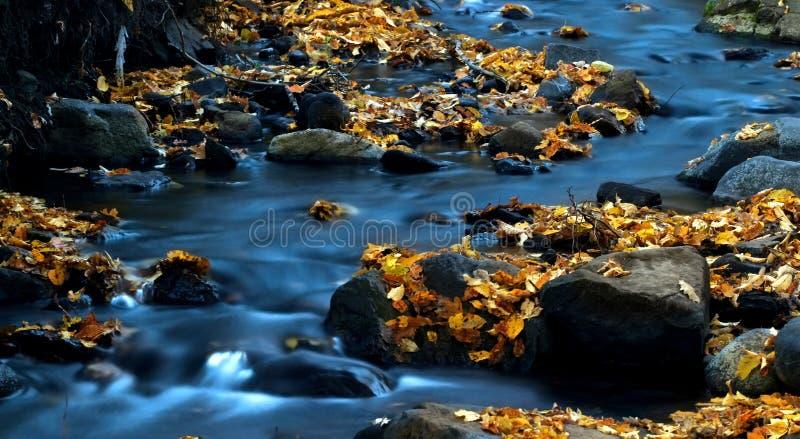 вода 3 листьев стоковое фото rf