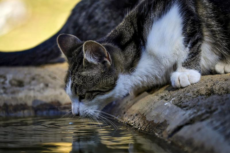 Вода lapping кота стоковые фотографии rf
