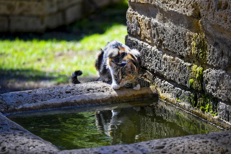 Вода lapping кота стоковая фотография