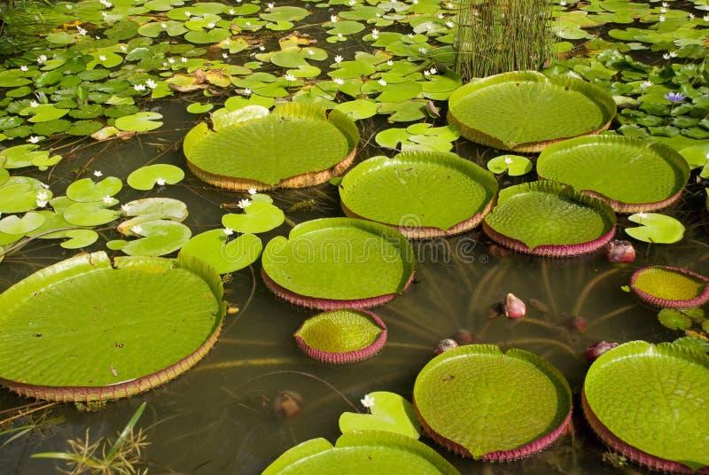 вода santa диска cruz стоковое фото rf