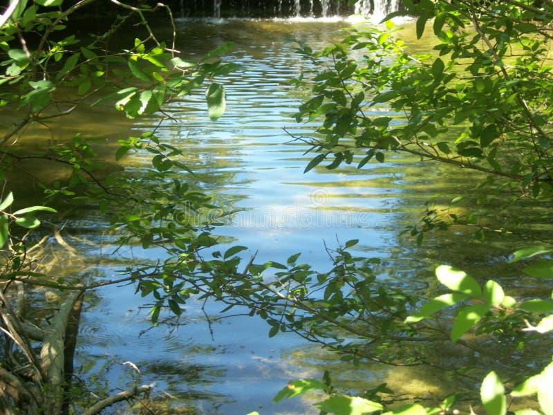 Водный бассейн за листьями дерева стоковое фото rf