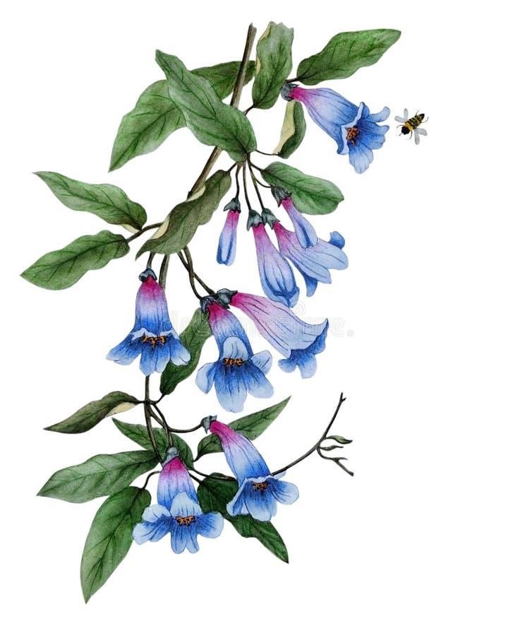 Водный цвет с тонкими цветами синих колоколов иллюстрация вектора