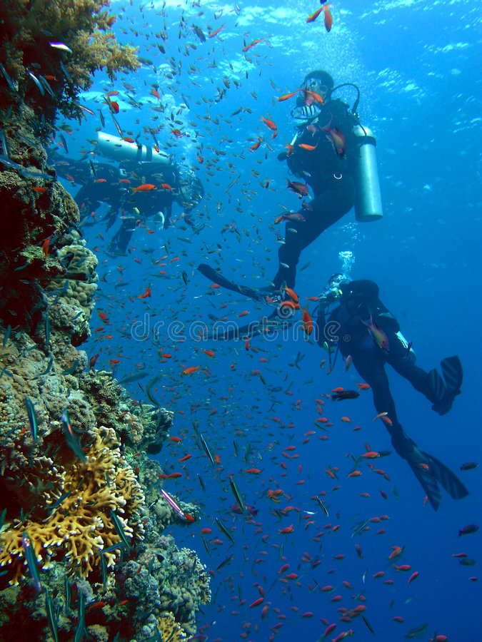 водолазы стоковое изображение