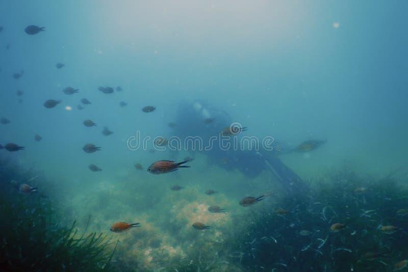Водолаз акваланга плавая под водой исследует риф и рассматривает морское дно стоковые фотографии rf