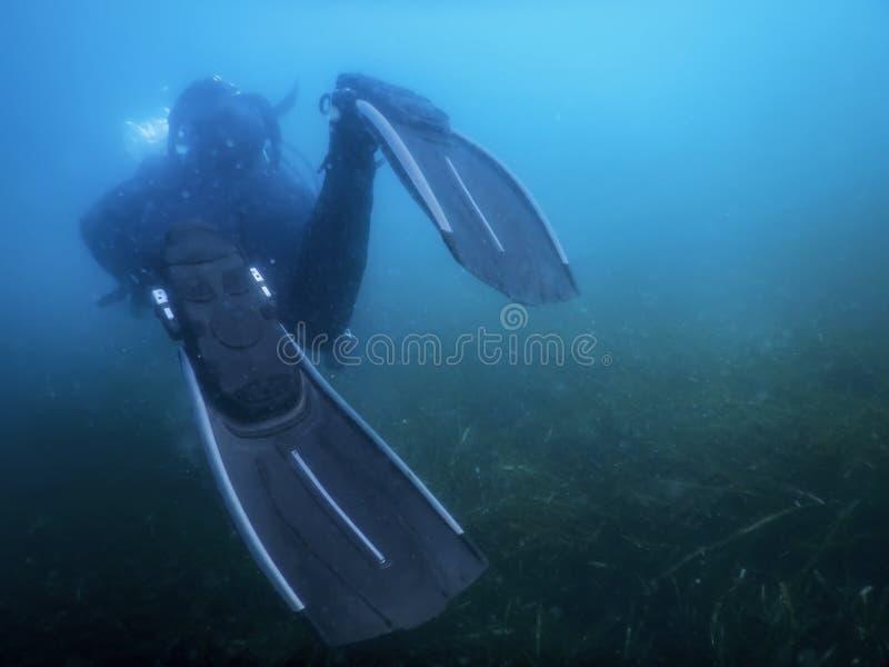 Водолаз акваланга плавая под водой исследует риф и рассматривает морское дно стоковое фото rf