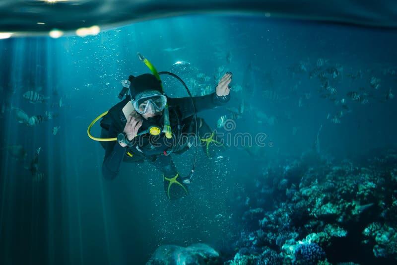 Водолаз в мокрой одежде и водолазном снаряжении, подводном взгляде стоковые фотографии rf