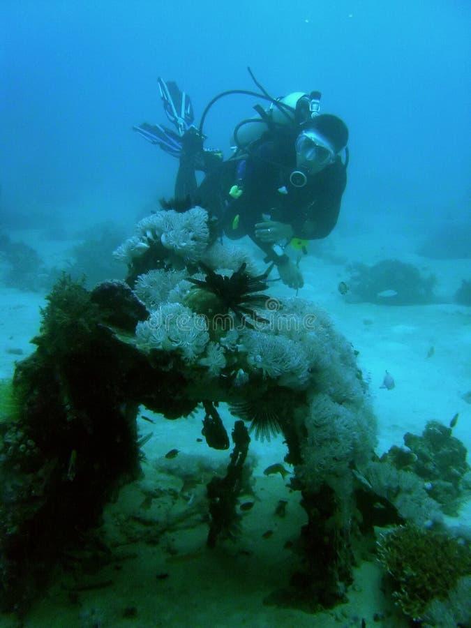 водолаз исследуя крах нул скуба philippines стоковое изображение