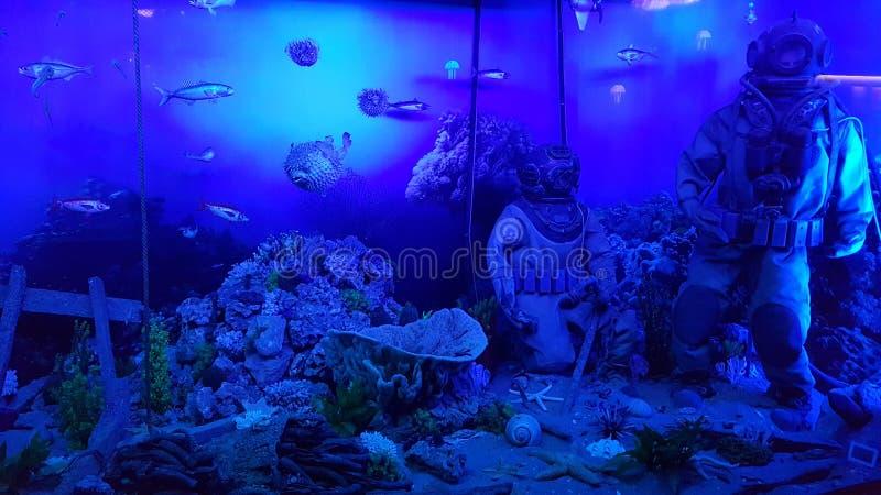 Водолаз и рыбы контакта океана стоковая фотография rf
