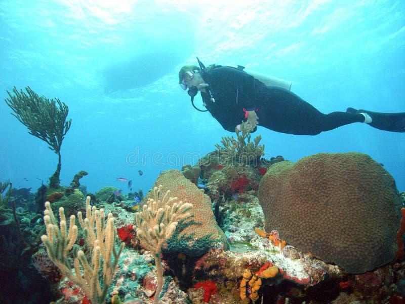 водолаз коралла стоковые изображения
