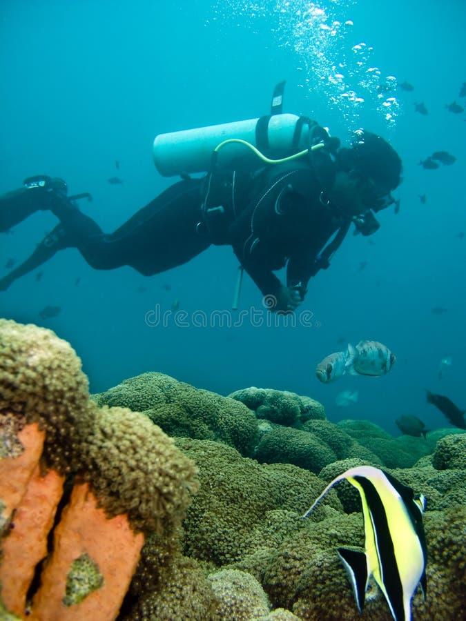 водолаз стоковое изображение