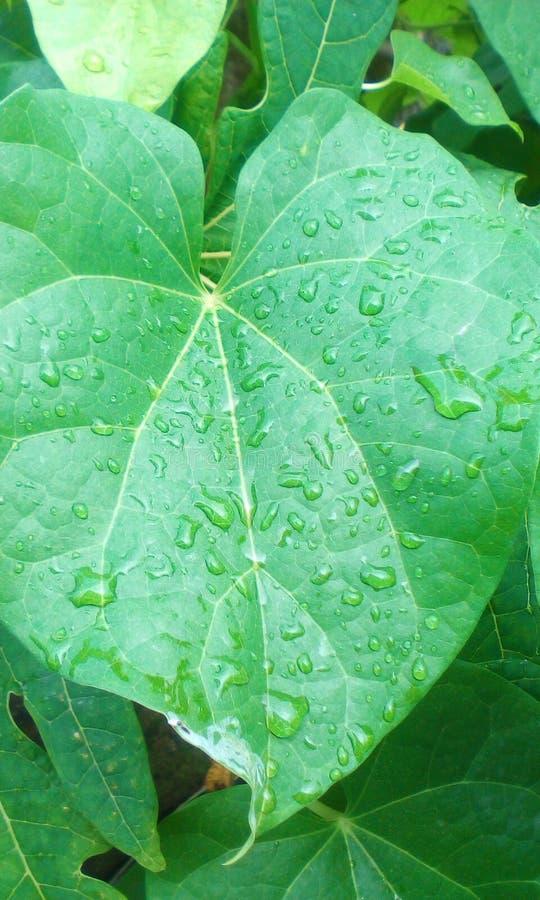 Водообильные листья стоковые фото