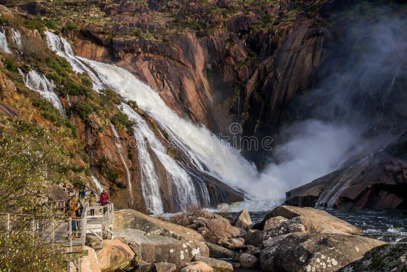 Водопады в реках и славном лесе стоковое фото