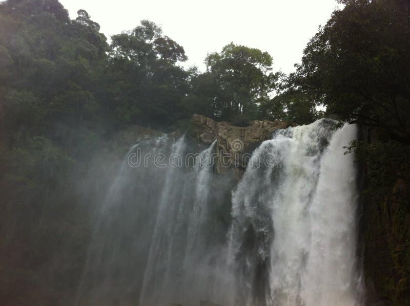 водопады, деревья и ветерок воды стоковые фотографии rf