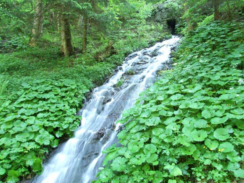 Водопады и каскады в долине Weisstannental стоковое фото