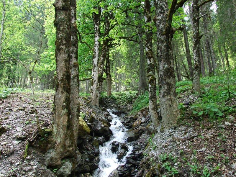 Водопады и каскады в долине Weisstannental стоковые фотографии rf