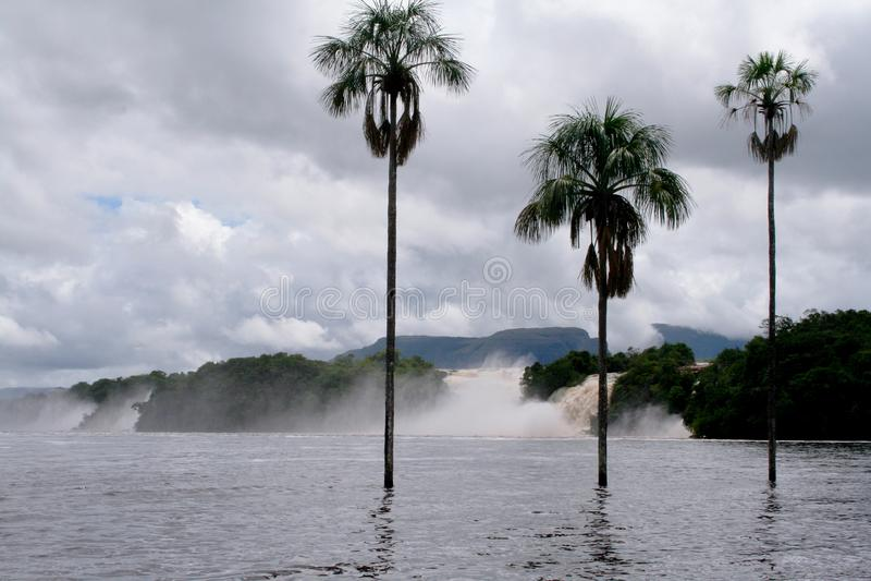 Водопады окружили озеро с 3 пальмами стоковые фото