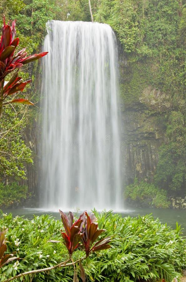 водопад Австралии красивейший тропический стоковое фото rf