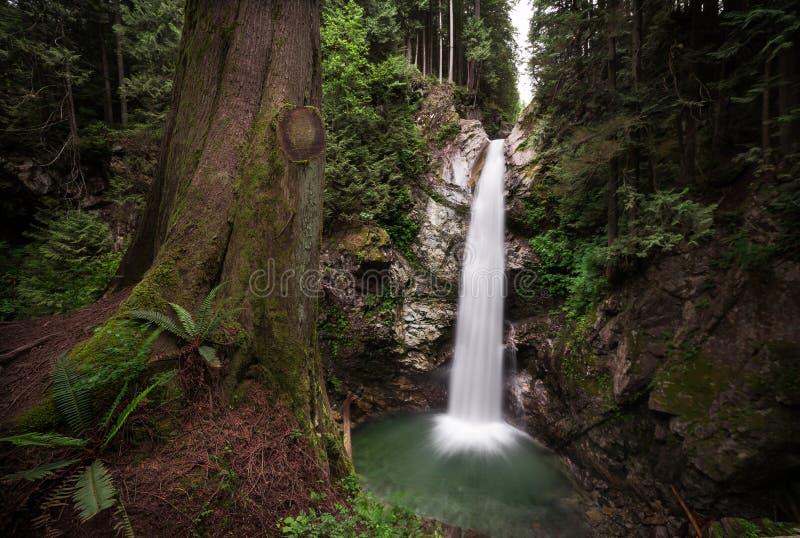 Водопад в вечнозеленом лесе с папоротниками и деревом на переднем плане на Casacade падает, полет, ДО РОЖДЕСТВА ХРИСТОВА стоковые изображения