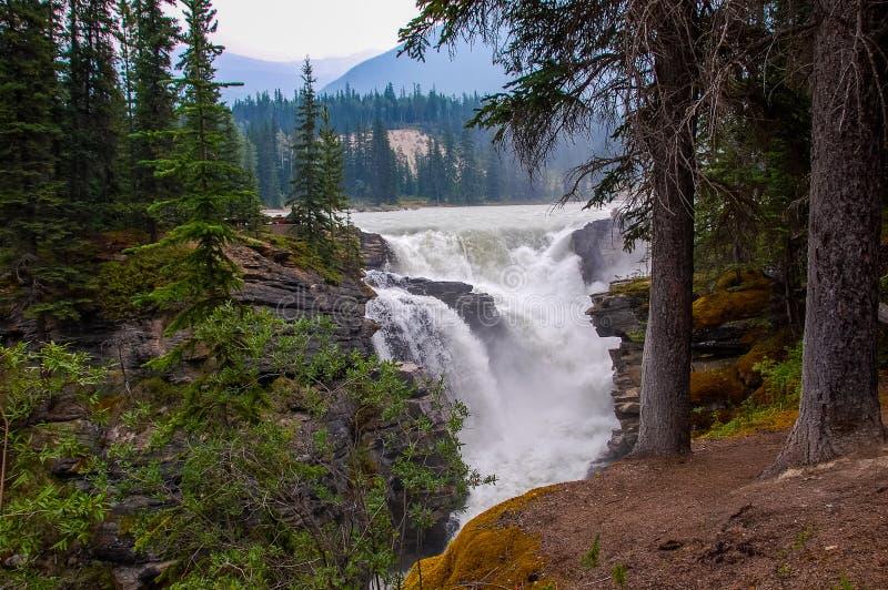 Водопад в лесе в Канаде стоковая фотография
