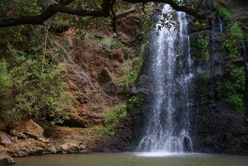 Водопад в лесе Ngare Ndare, Кении стоковые изображения