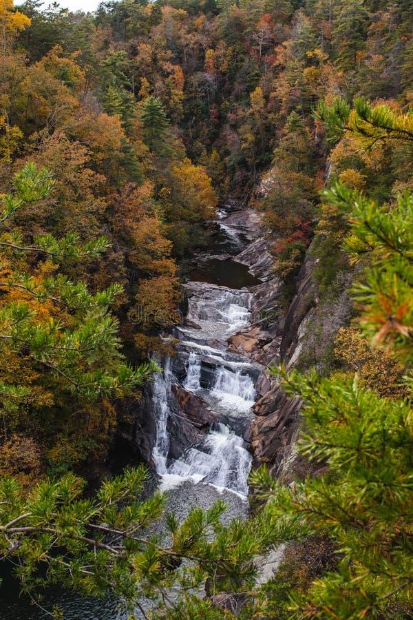 Водопад в цветах падения стоковая фотография rf