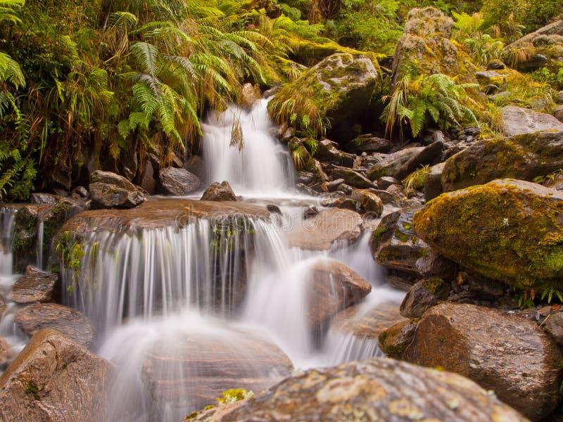 водопад дождевого леса стоковое фото