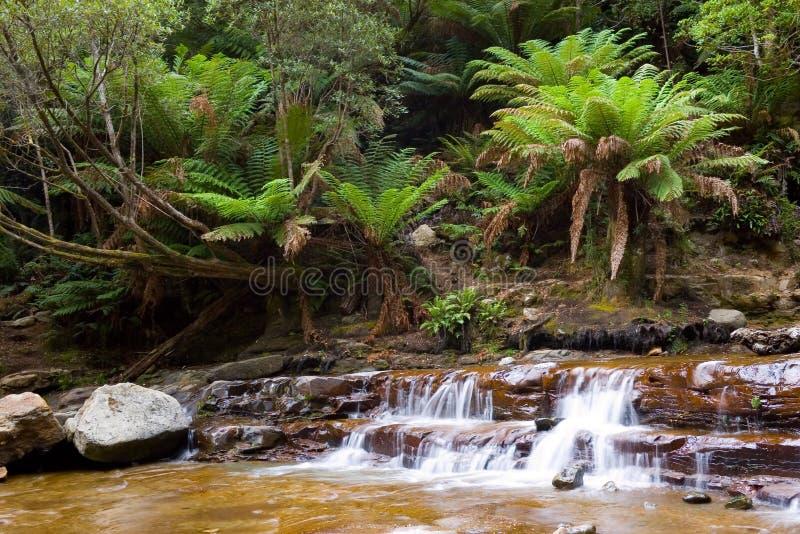водопад дождевого леса стоковая фотография