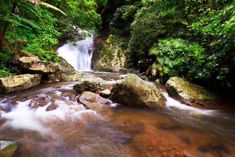 водопад дождя пущи стоковое фото rf