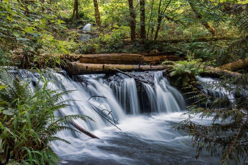 водопад и упаденные журналы с папоротником в западном штате Вашингтоне стоковые фотографии rf