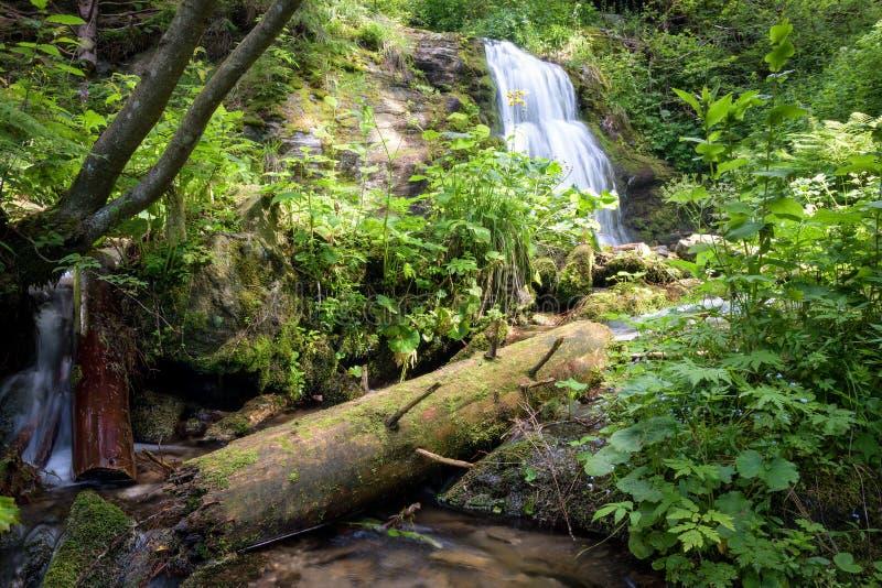 Водопад лета долгой выдержки в лесе стоковое изображение