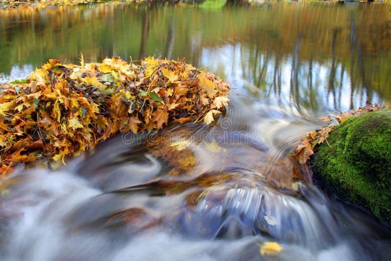 водопад листьев осени стоковая фотография