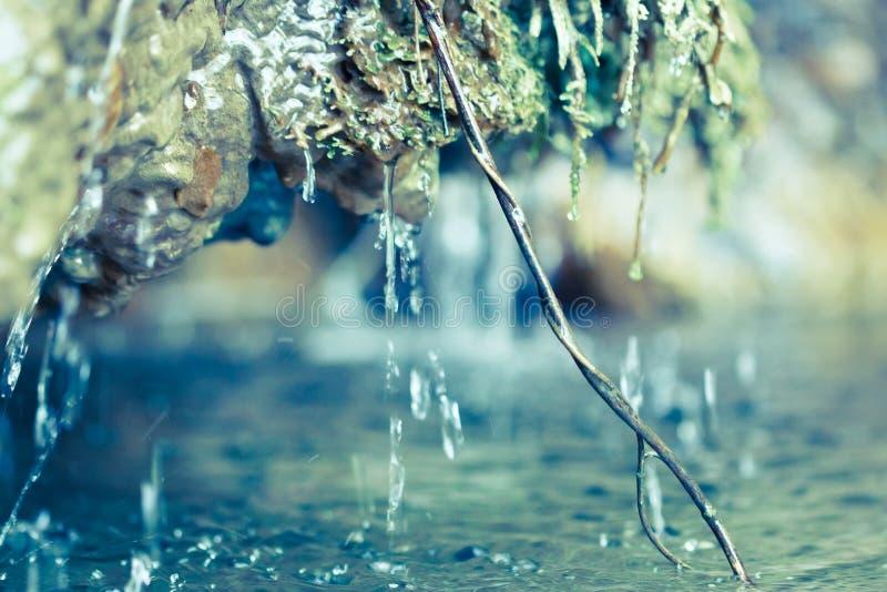 водопад макроса ветви малый стоковые изображения rf