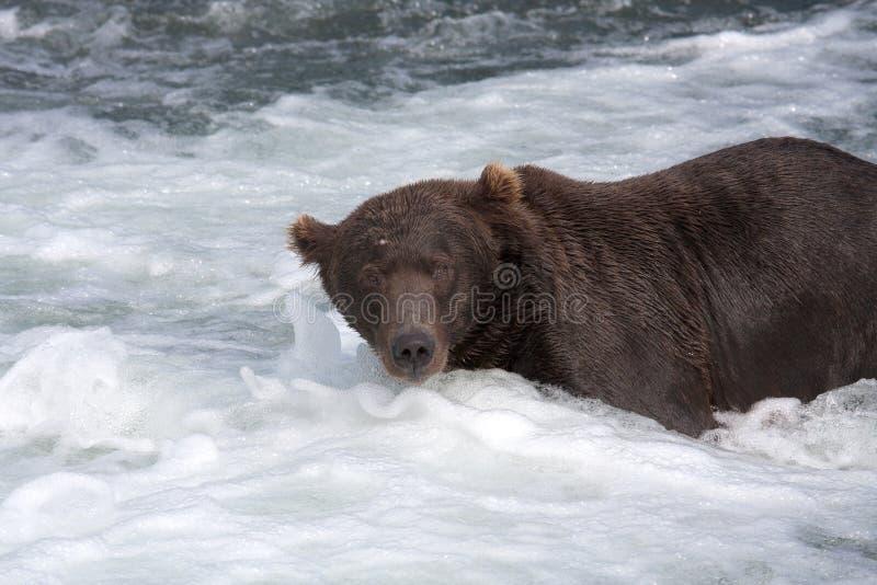 водопад медведя коричневый стоковая фотография rf