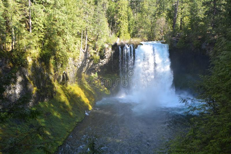 Водопад на реке Mckenzie, ряде каскада, Орегоне стоковая фотография rf